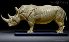 Rhino Anatomy model at scale - flesh & superficial muscle Anatomy Study, Anatomy Drawing, Anatomy Reference, Art Reference, Elephant Anatomy, Animal Anatomy, Animal Sketches, Animal Drawings, Animal Sculptures