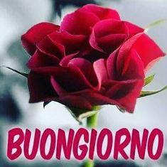 Die 145 Besten Bilder Von Italienisch Buongiorno