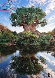 Tree of Life at Disney's Animal Kingdom, Walt Disney World, FL