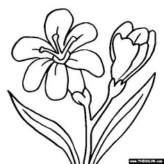 Free Flowers Coloring Pages. Color in this picture of a Freesia and others with our library of online coloring pages. Online Coloring Pages, Flower Coloring Pages, Coloring Books, Amazing Flowers, Colorful Flowers, Woodworking Templates, Freesia Flowers, Cartoon Drawings Of Animals, Cartoon Drawing Tutorial