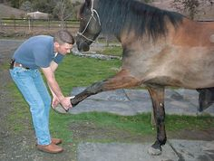 Dr. Grant Miller discusses avoiding ligament injuries and what to do if your horse suffers one.