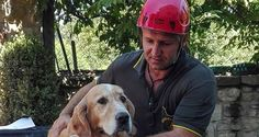 Rescuers find dog trapped in rubble 9 days after earthquake in Italy.