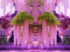 Purple Wisteria in Japan.  --- WOW!