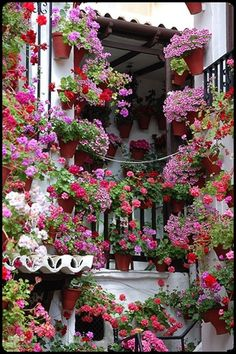 Italian gardens - imagine watering it