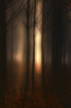 """""""The woods are lovely, dark and deep. But I have promises to keep, and miles to go before I sleep, and miles to go before I sleep.""""  ~ Robert Frost"""