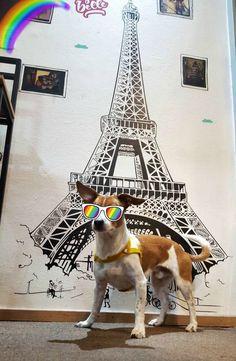 Hoy nos visitó Morris, tomó unos mates, nos contó sobre lo divertido que es ser un perro y hasta se sacó una foto con el vinilo de la Torre Eiffel!