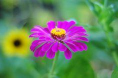 raised-urban-gardens-062113-how-to-garden-my-harvest-8