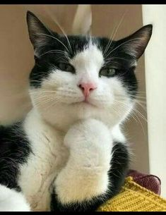 Animals Discover Cute Cats And Kittens Kittens Cutest I Love Cats Crazy Cats Kitty Cats Pet Cats Weird Cats Lady Kitty Ragdoll Cats Funny Animal Memes, Cute Funny Animals, Cat Memes, Funny Cats, Squirrel Memes, Funny Memes, Cute Cats And Kittens, I Love Cats, Crazy Cats