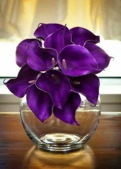 Gorgeous Dark Purple