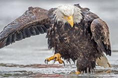 Birdbath Time!