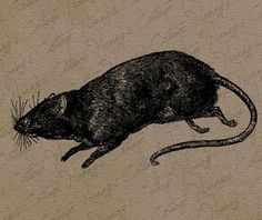 Rat Rodent Vintage Digital Graphics Instant by nannyscottage