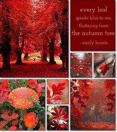 EVERY LEAF SPEAKS BLISS TO ME ~ FLUTTERING FROM THE AUTUMN TREE ~ EMILY BRONTE ~~