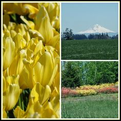 April's Homemaking: Our Visit to The Wooden Shoe Tulip Farm