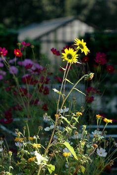 Sunlit Flowers   fine art nature photography  by CameraQueenPhoto