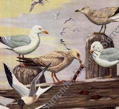 Gulls Terns Sea Birds Print Fuertes Vintage Natural History Lithograph Illustration