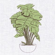 Groundworks Houseplant Guide: The Swiss Cheese Plant/ Monstera Deliciosa Indoor Plant Pots, Indoor Gardening, Swiss Cheese Plant, Growing Greens, Painting Quotes, Monstera Deliciosa, Vintage Planters, Plant Care, Amazing Gardens