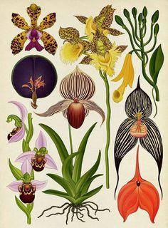 Katie Scott Botanic