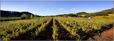Imagery Estate Winery - One of my favorite Vineyards!