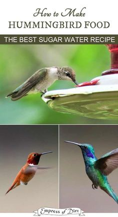 How to make hummingbird nectar for your feeder. Make sure you prepare it properly and keep the feeder clean to avoid the spread of disease. Sugar Water For Hummingbirds, How To Attract Hummingbirds, How To Attract Birds, Homemade Hummingbird Food, Hummingbird Plants, Hummingbird House, Hummingbird Feeder Food, Humming Bird Feeders, Humming Birds