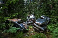 Two forest-dwelling Swedish brothers ran the scrap yard until the 1980s before they abandoned the site in the 1990s, leaving the forest undergrowth to claim the cars.