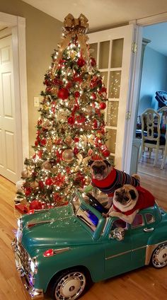 I ღ Dogs. Pug Christmas, Christmas Animals, Dog Lover Gifts, Dog Gifts, Dog Lovers, Cute Pugs, Funny Pugs, Pugs And Kisses, Pug Pictures