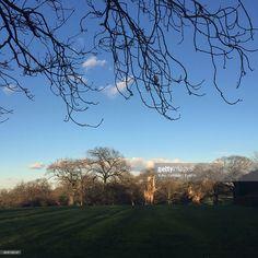 ストックフォト : Trees On Field In Park Against Sky