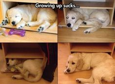 Growing Up Is Overrated