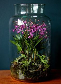 Chinese ground orchids growing in a terrarium. I grow this same color ground orchid, both outdoors in the ground, and in a wide pot, to bring inside to enjoy half the year. I have never thought of growing them in a terrarium. Orchid Terrarium, Terrarium Plants, Succulent Terrarium, Garden Plants, Indoor Plants, Terrarium Centerpiece, Fairy Terrarium, Plants In Jars, Indoor Water Garden