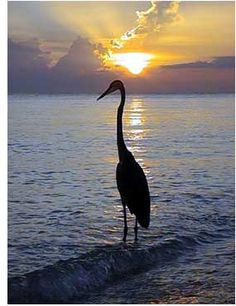 Sanibel Island, Florida