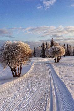 """🌥Under a Winter sun☃️🧣🧤 ⛄️🧣🧤"" Winter Szenen, I Love Winter, Winter Magic, Winter Christmas, Winter Photography, Nature Photography, Snow Scenes, Winter Beauty, Winter Pictures"