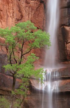 Waterfall at Weeping Rock - Zion National Park, Utah