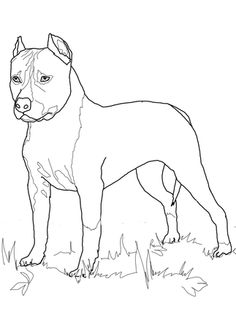 Click the American Staffordshire Terrier colouring page to view the printable version or colour it in online.