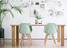 Yeah, Modernica. Shell chairs in Jadeite. Available at Forage Modern Workshop