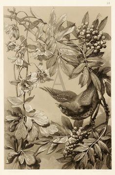 Pin by Mary Meszaros on Botanical | Pinterest