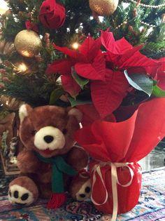 Rocking around the Christmas tree! Christmas Poinsettia, Christmas Wreaths, Merry Christmas, Dear Santa, Cottage, Toys, Holiday Decor, Home Decor, Christmas Swags