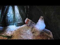 Wachtel Stall |Wachtelhaltung 1| - YouTube