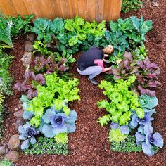 Keyhole garden layout - Growing Winter Vegetables - Sunset