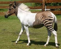 Resultado de imagen para imagenes de animales asombrosas