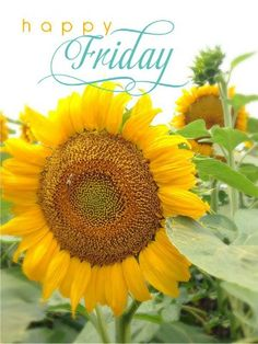 Happy Friday quotes quote friday happy friday tgif days of the week friday quotes friday love happy friday quotes Happy Friday Pictures, Happy Friday Quotes, Friday Images, Blessed Friday, Good Morning Greetings, Good Morning Good Night, Good Morning Wishes, Good Morning Quotes, Morning Messages