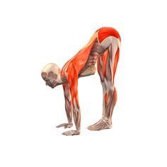 Standing forward bend with hands on the floor - Uttanasana, hands on the floor - Yoga Poses | YOGA.com