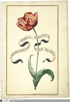 Karlsruher Tulpenbücher - Karlsruhe 3301 und 3302, GLA Karlsruhe Hfk-Hs Nr. 263 und 269 Band2 Titel [Band 2] - Karlsruhe 3302 Erschienen [Karlsruhe], 1730