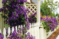 Picket Fence   Picket Fences