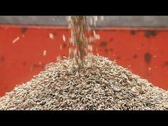 Seeds of Time: zaden worden veilig bewaard in ondergrondse bunkers (enkel toegankelijk voor wetenschappers, grote bedrijven,...?)