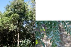Top 10 trees to plant in a small garden - DIY - Grounded Landscaping Trees And Shrubs, Trees To Plant, 10 Tree, Small Gardens, Gardening, Landscape, Plants, Scenery, Tree Planting