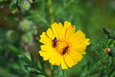 Σκέψεις: Η αγάπη είναι…..,Παρασκευή Κηπουρίδου Plants, Plant, Planets