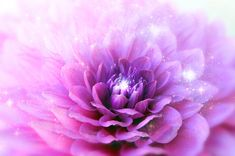 Please take a moment to relax and feel centered. Focus your entire awareness on the center of this violet colored flower mystic gateway. Imagine that you're inhaling and exhaling the essence of the color and the tones into your seventh chakra. (This is the area at the very top of your head.) Alternatively, you can imagine a violet flame filling your entire being. Just doing this will help to harmonize this chakra and activate the vibration of the color into your auric field.