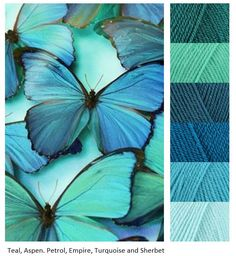 Blue and turquoise butterfly colour palette. Morpho Bleu, Morpho Butterfly, Butterfly Wings, Butterfly Kisses, Purple Butterfly, Blue Butterfly Meaning, Cabbage Butterfly, Blue Butterfly Wallpaper, Butterfly Photos