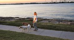 Plan summer dog walks for early morning and late evening hours when temperatures drop.