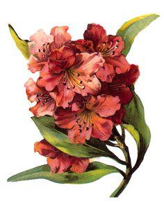 Free Vintage Floral Art Prints | Vintage Floral Prints - Clip art for your cards, paper crafts ...