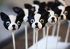Love these French Bulldog cake pops